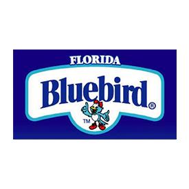 Florida Bluebird